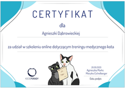 Trening medyczny kota