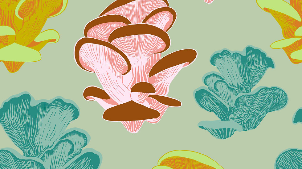 Oyster Mushrooms Wallpaper