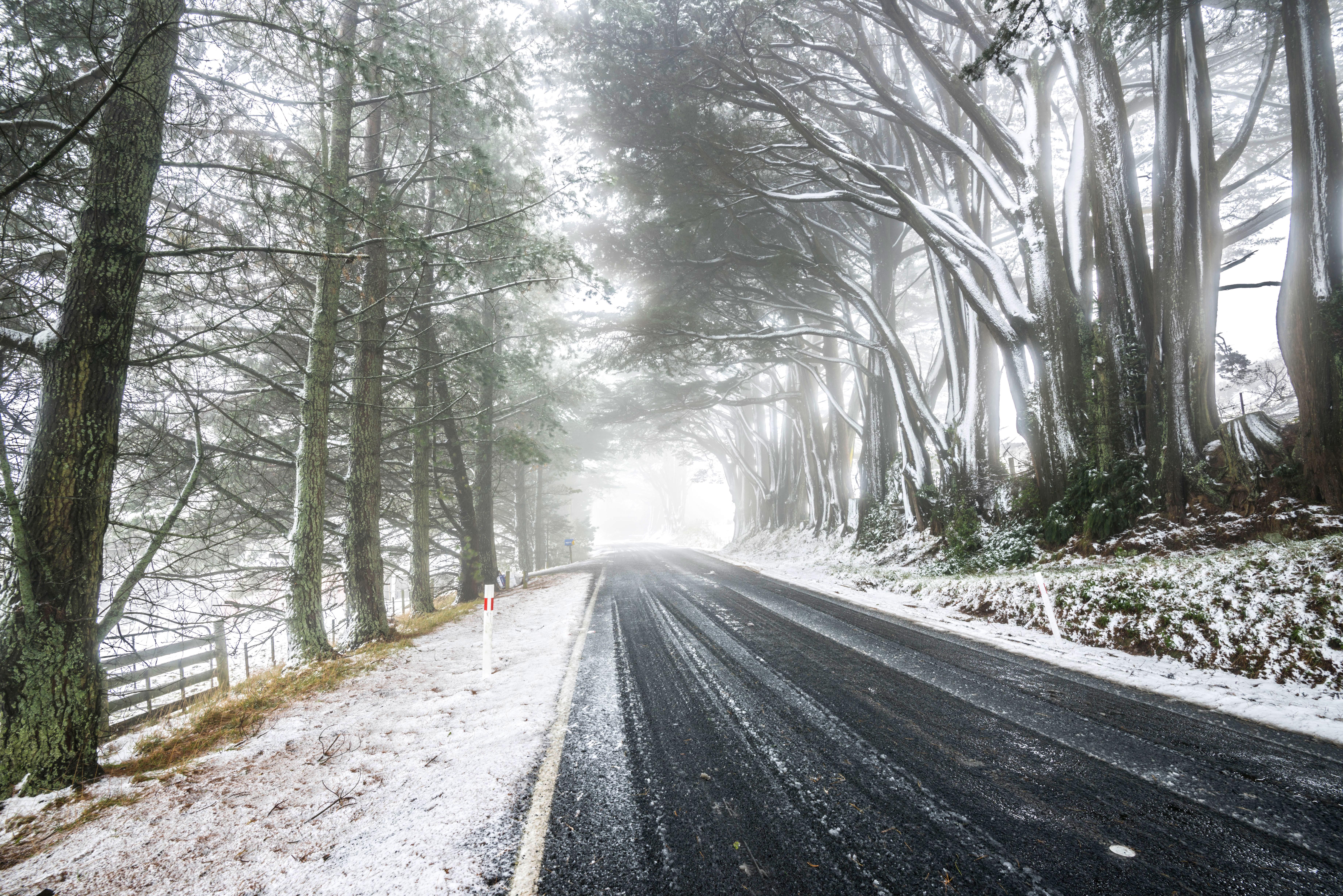 Camp Road, Dunedin