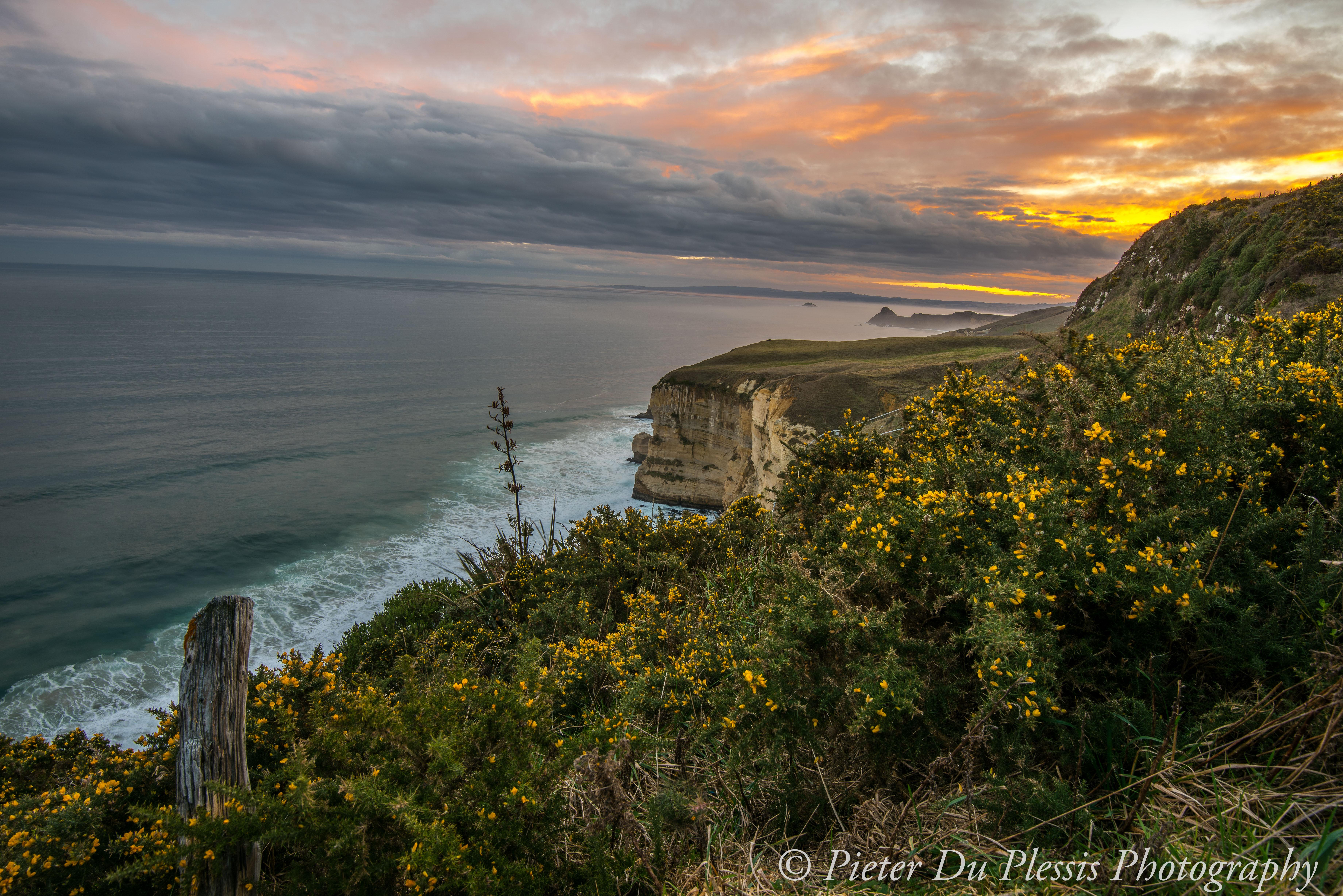 Dunedin Coastline