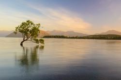The Lone Tree, Lake Wanaka, New Zealand