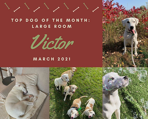 Teal Dog Birthday Pet Photo Collage.jpg