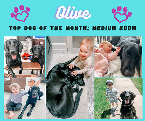 olive top dog .png