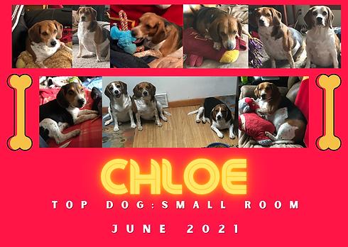chloe top dog.png