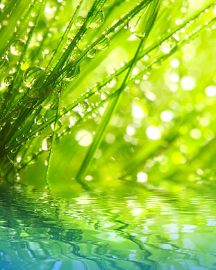 Fresh morning dew on a spring grass in e
