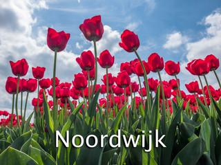 051 Noordwijk