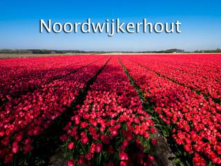 056 Noordwijkerhout