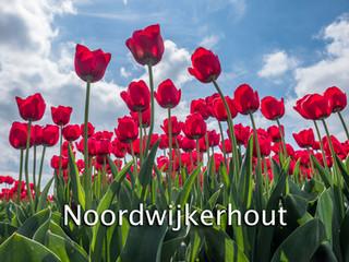 051 Noordwijkerhout