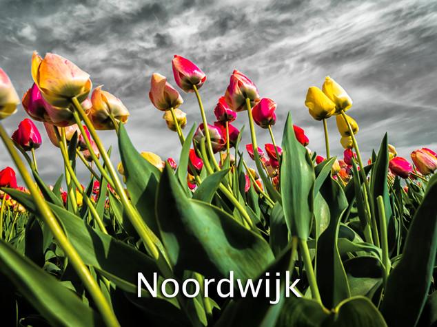 037 Noordwijk