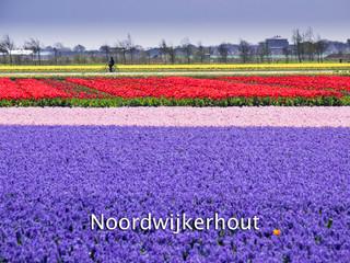 053 Noordwijkerhout
