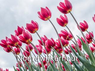 054 Noordwijkerhout