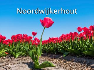 044 Noordwijkerhout