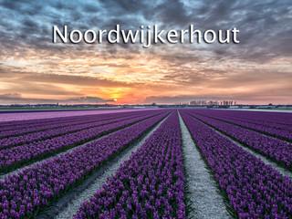 004 Noordwijkerhout