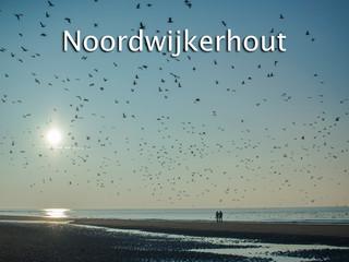016 Noordwijkerhout
