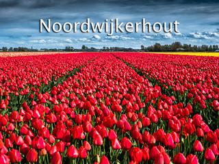 039 Noordwijkerhout