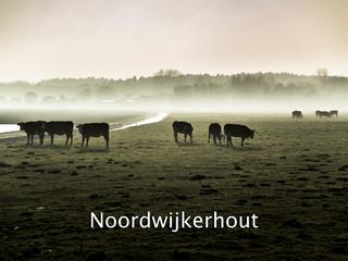 031 Noordwijkerhout