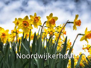 058. Noordwijkerhout