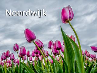 038 Noordwijk