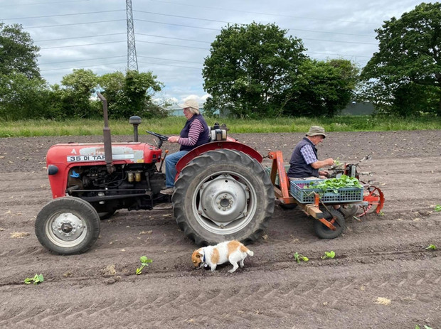 It's lovely to see my mum and dad working together planting the last of the pumpkins for this years crop. Their combined age is 153 years, pumpkin planter is 50 years old, tractor 18 years old, watching mum and dad is priceless! ❤️ looking forward to seeing the pumpkins grow  #dunhammassey #altrincham #pumpkinseason #pumpkinpatch #familyfarm