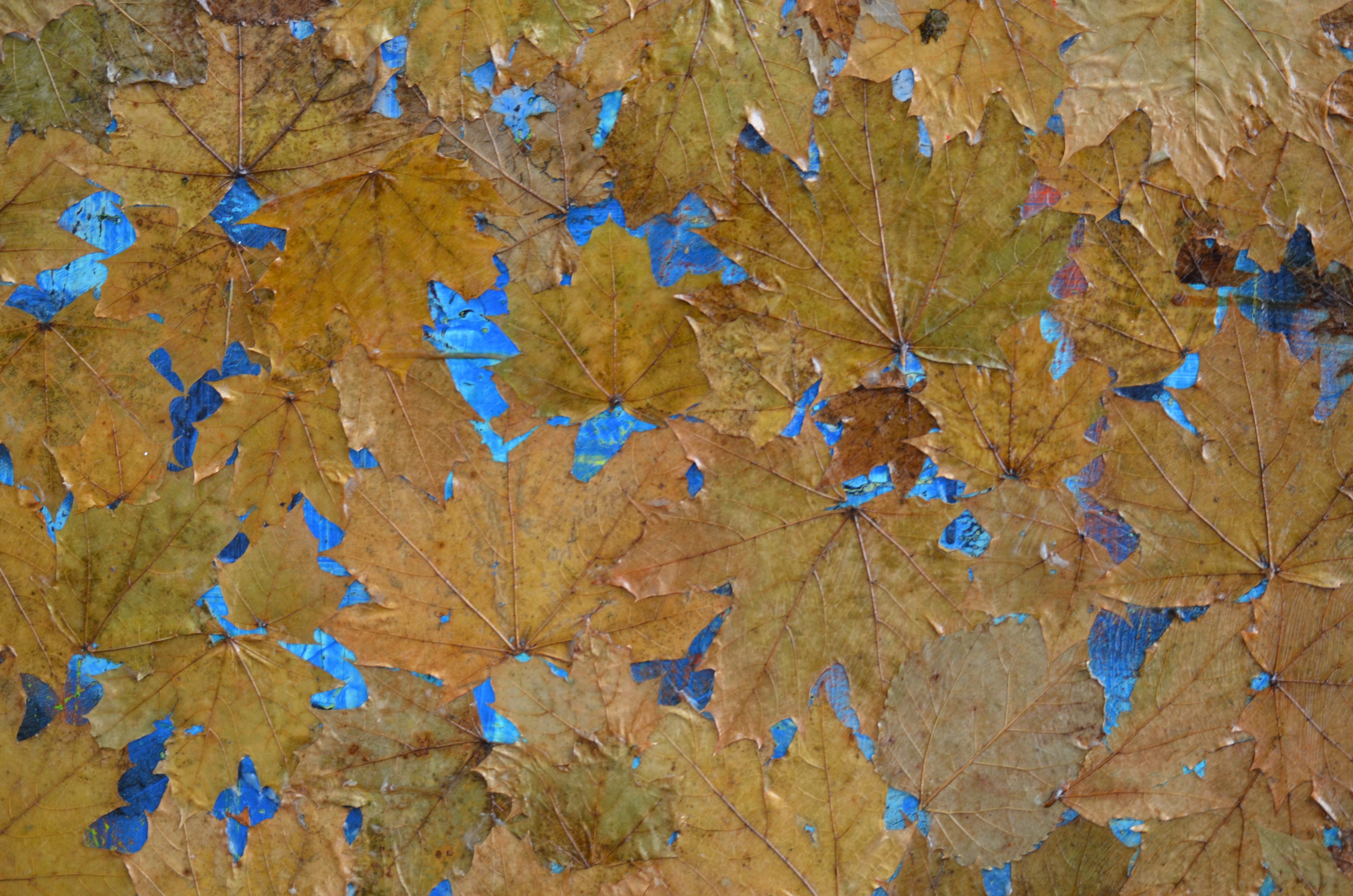 Sky acrylic medium, tempera and leaves on canvas 24 x 30 Inch 2019 Land acrylic medium, tempera and