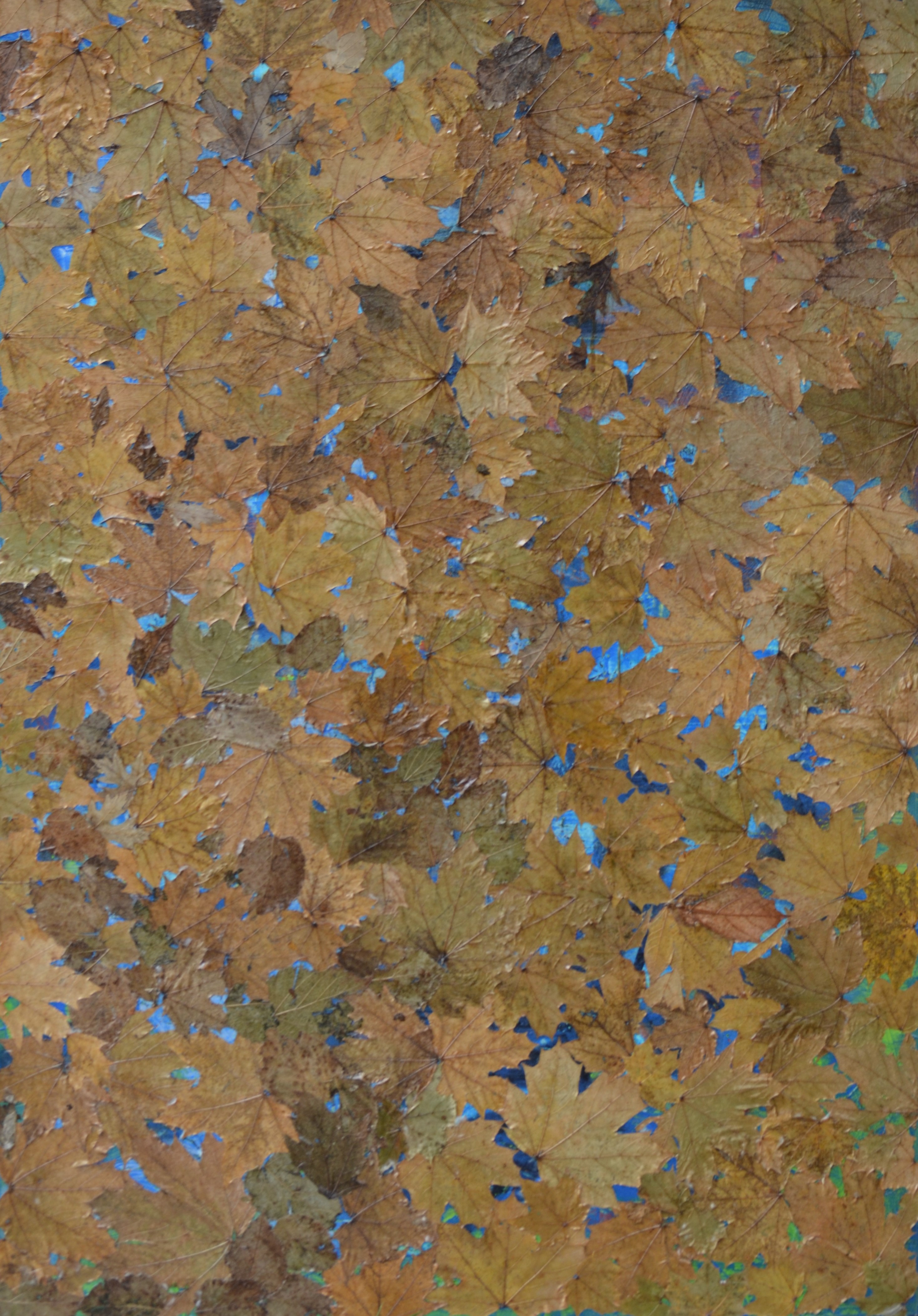 51.5x36 leaves and acrylic on canvas