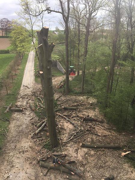 Abattage arbre Namur