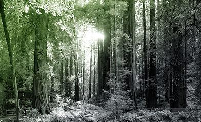 Wald_Website_7_verlauf2.jpg