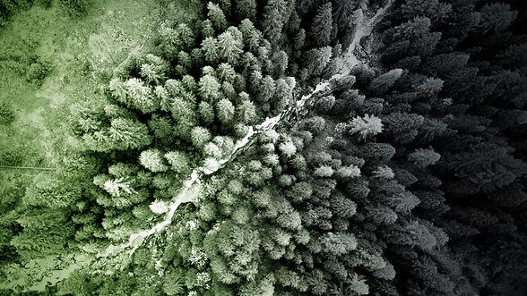 Wald_ligenium.jpg