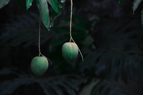 Havana Mangoes