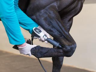 Вниманию практикующих ветеринарных врачей! Maxima Vet открывает вам свои двери.