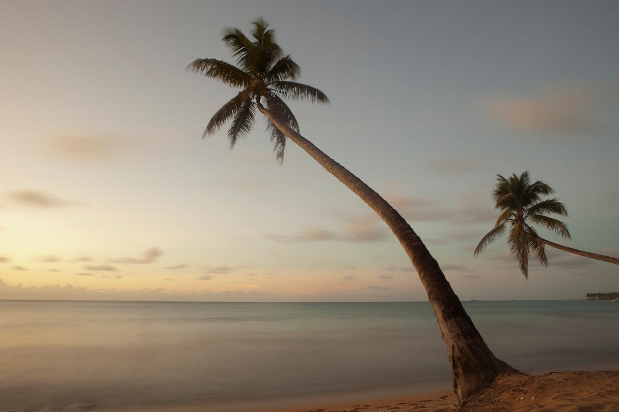 Palm trees and ocean, Las Terrenas, DR