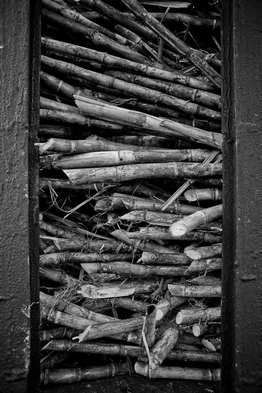 Raw sugar cane in a train car in La Romana, DR