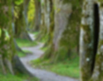trees-2897757_960_720.jpg
