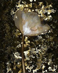 Tulip6in.jpg
