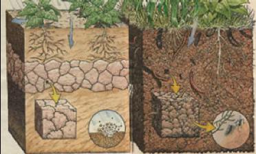 A importância dos microrganismos para conservação do ecossistema solo na área agronômica