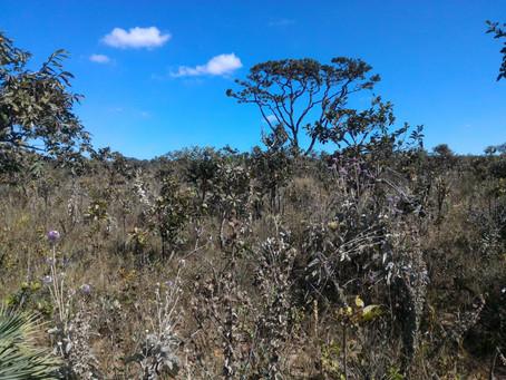 A importância do uso de imagens ópticas para a conservação da vegetação do bioma Cerrado
