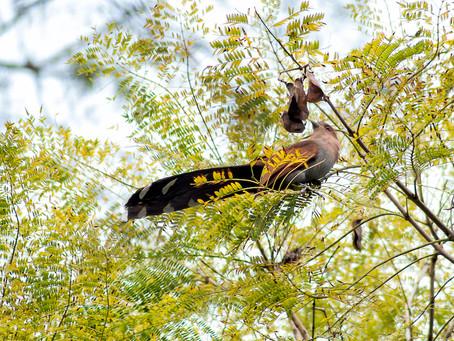 A Importância da avifauna para a vegetação