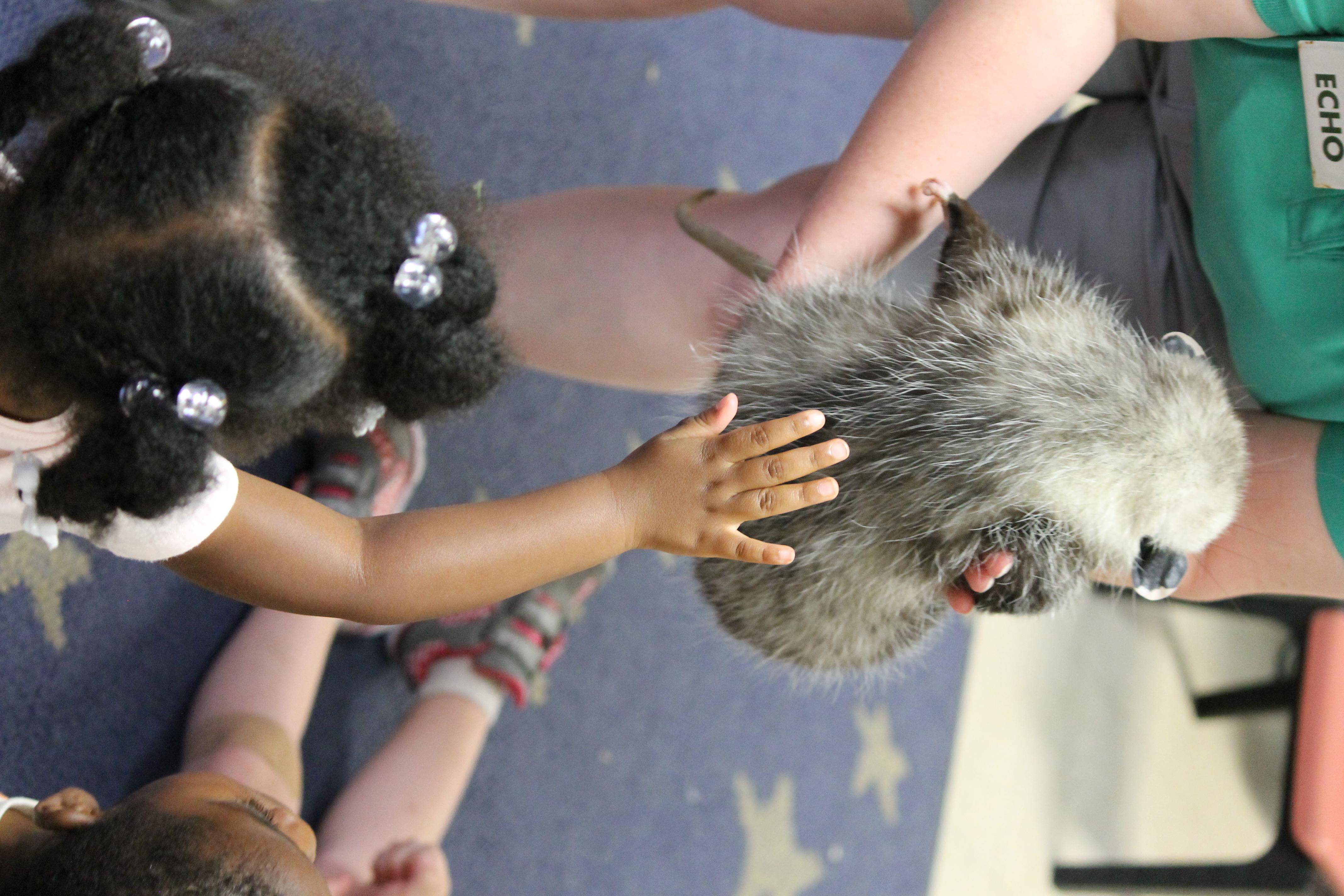 Opossum Touch
