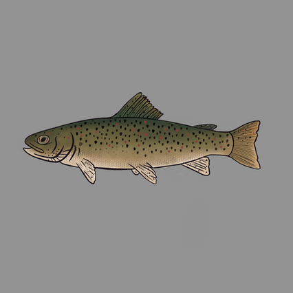 Trout_Icon.png