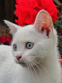 Gato y geranio