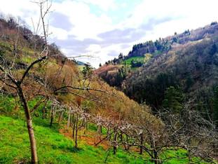 Valle del Arganza