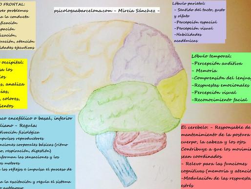 3# Sabías que... Curiosidades sobre la neurobiología de los traumas, las emociones y la conducta