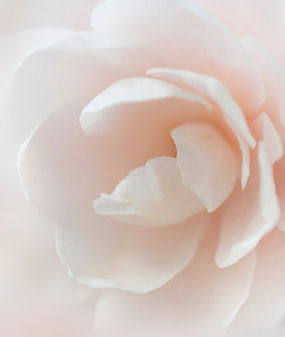 Soft%20background%20with%20white%20flowe
