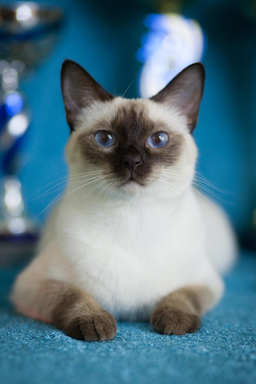 Клуб тайской кошки в москве клуб москвы для свингеров