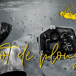 Les 5 plus beaux spots de plongée