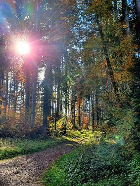 forêt_coaching_wix.jpg
