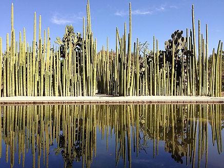 800px-Jardín_Etnobotánico_de_Oaxaca_08.j