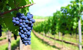 La Ruta del Vino: Valle de Guadalupe