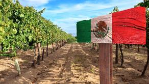 El Vino en México