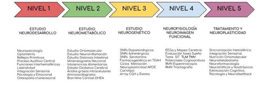grafico niveles neuronae (1).jpg